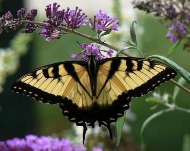 butterfly-649686_640