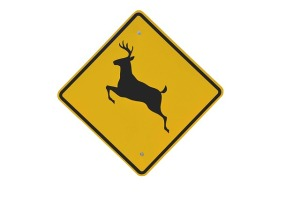 deer-crossing-2079620_640